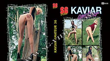 KAVIAR AMATEUR / Kaviar Amateur No.36