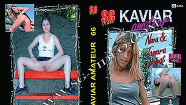 KAVIAR AMATEUR / Kaviar Amateur No.66